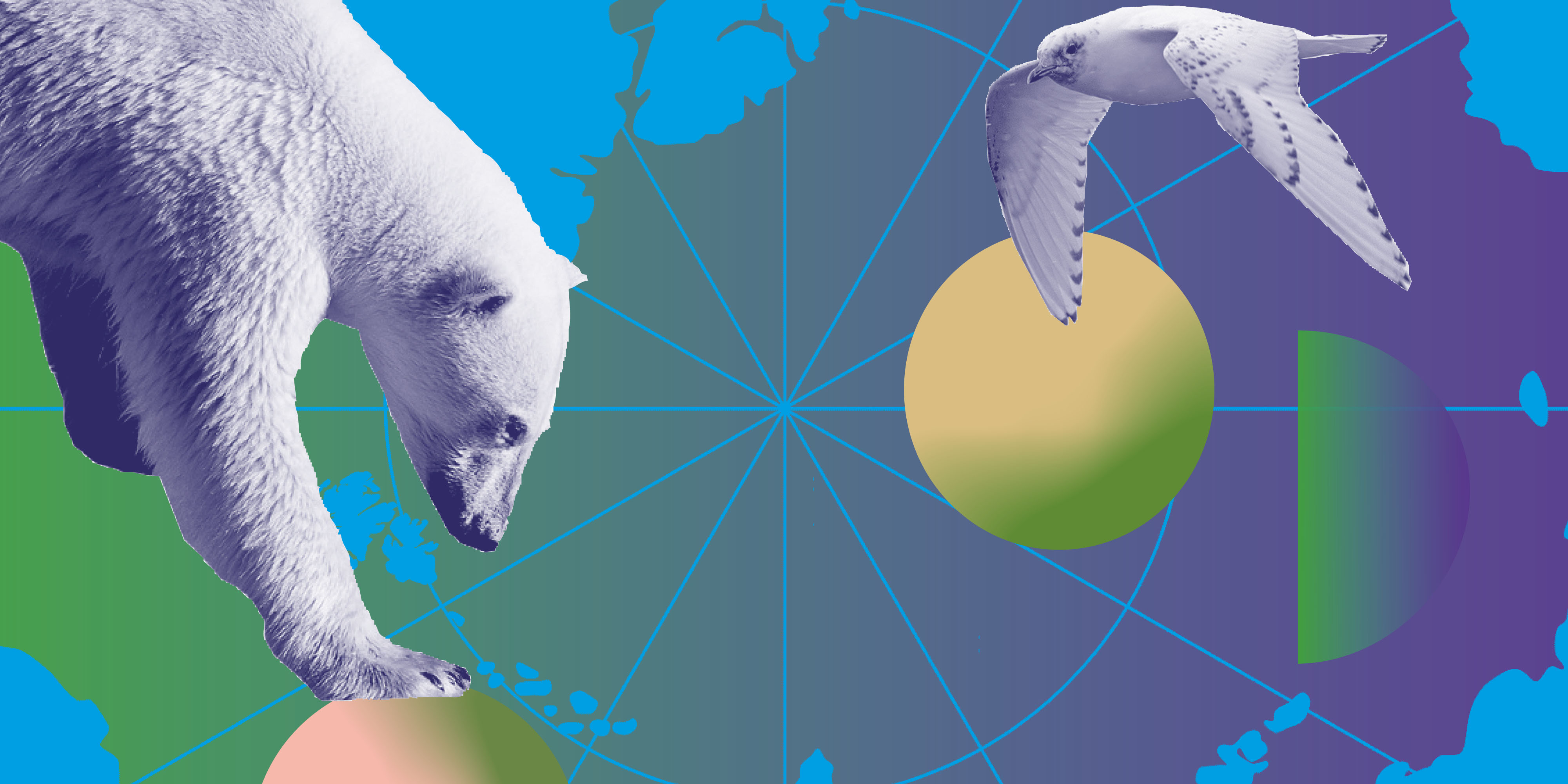 The image is an illustration of the North Pole. On the left is the upper body of a polar bear standing with its paw on a yellow-green ball, on the left is a bird. Graphic Design: Emilia Wärff